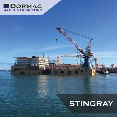 The Stingray